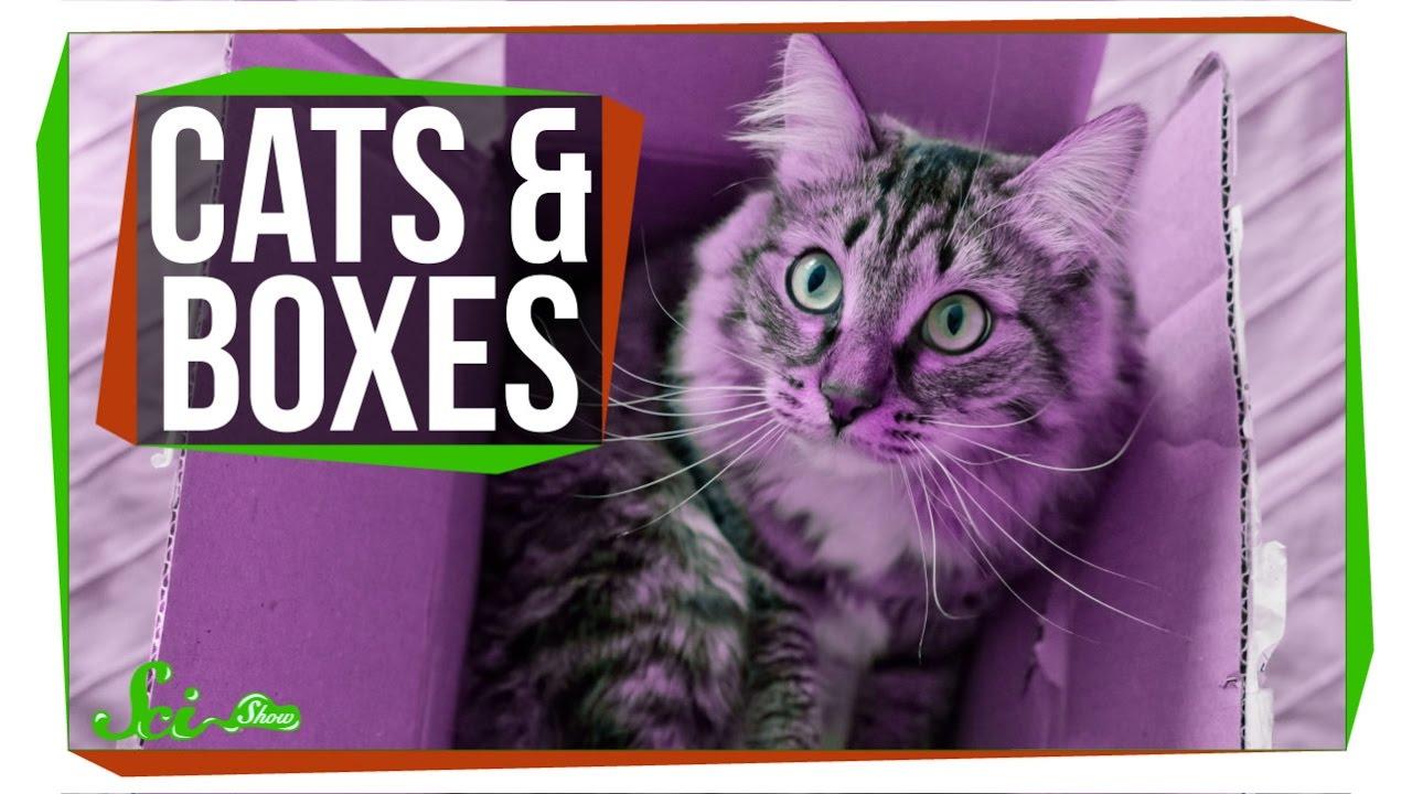 科學大哉問:為什麼貓咪都喜歡躲進箱子呢?