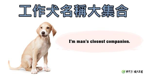 工作犬英文名稱大集合