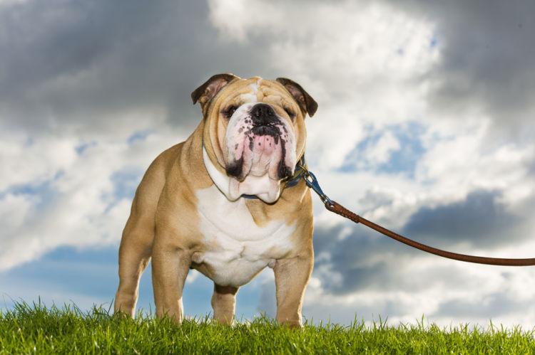 犬の高カルシウム血症とは