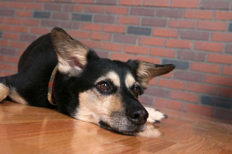 犬の高カルシウム血症【原因】