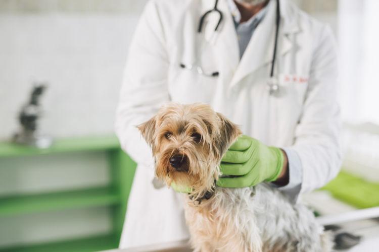 犬の高カルシウム血症【治療方法】