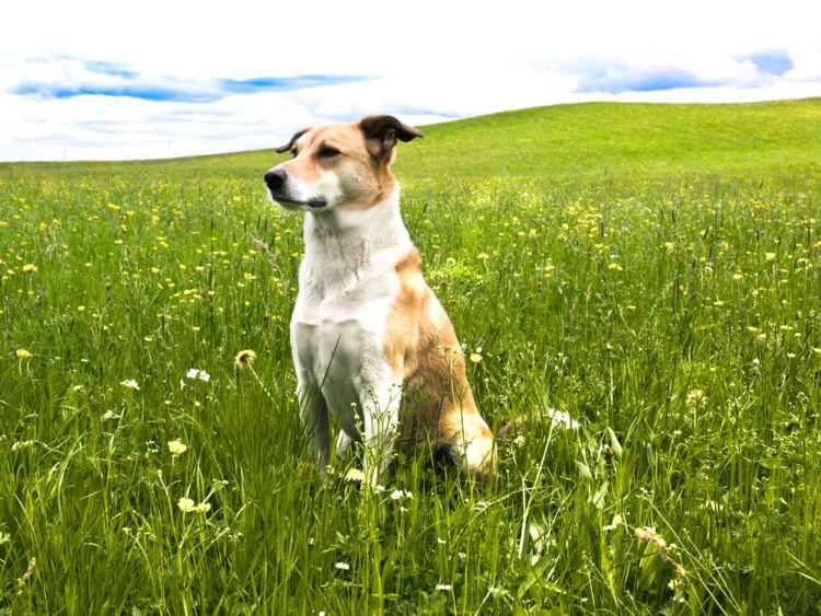 犬の高カルシウム血症【予防対策】