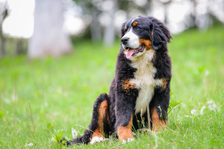 犬の高カルシウム血症が起こりうる病気