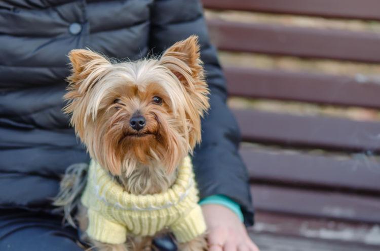 犬の低カルシウム血症とは