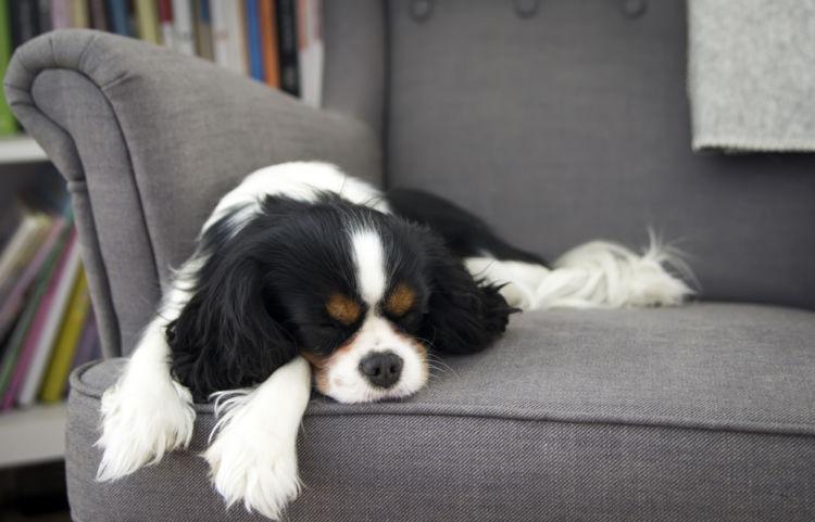 犬の低カルシウム血症【症状】