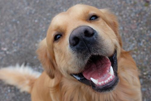 多くのプロが始めてる!意外と簡単♪「生肉」を使った犬の手作り食