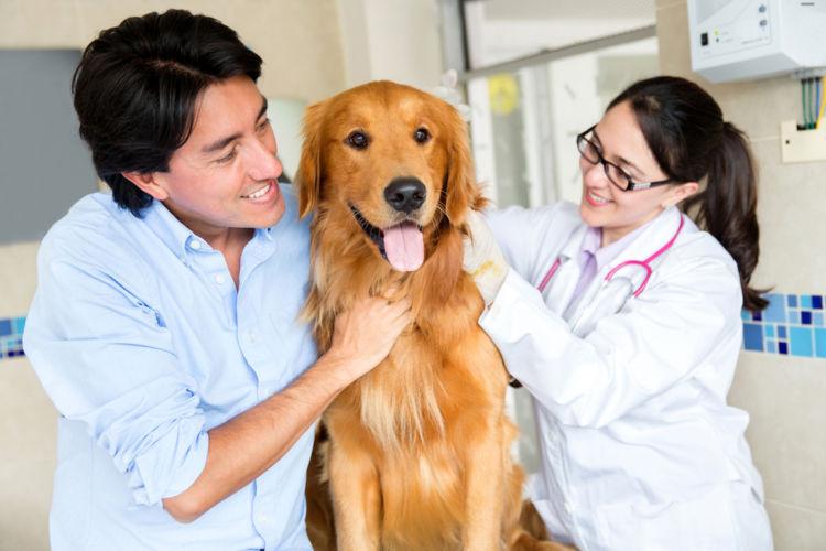 犬の低カルシウム血症【予防対策】