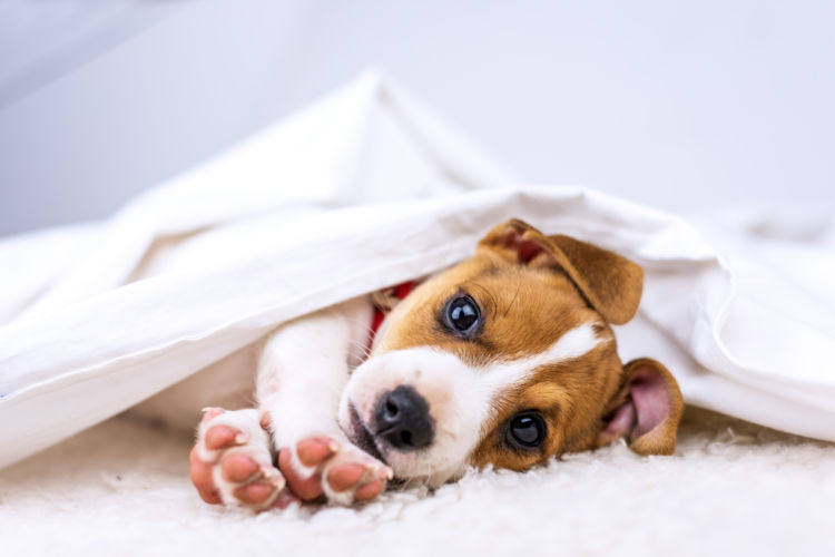 犬のノミアレルギー性皮膚炎と間違えやすい病気