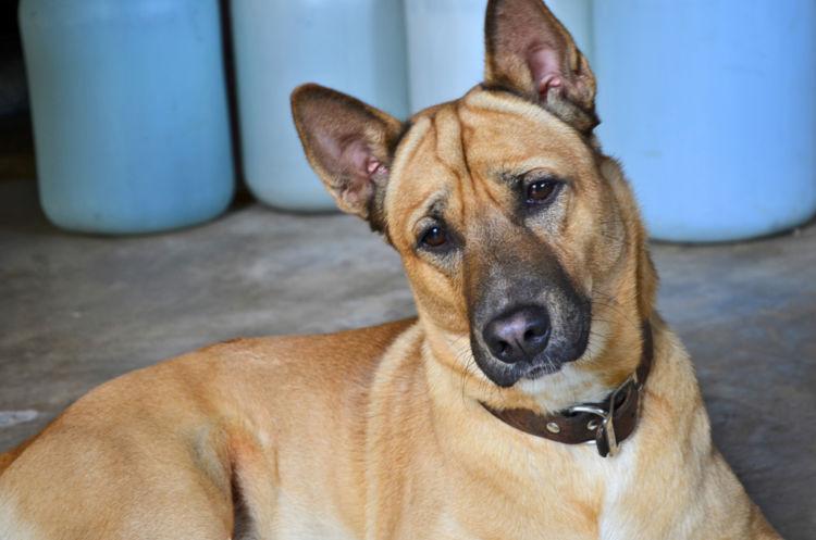 犬の接触性アレルギー性皮膚炎
