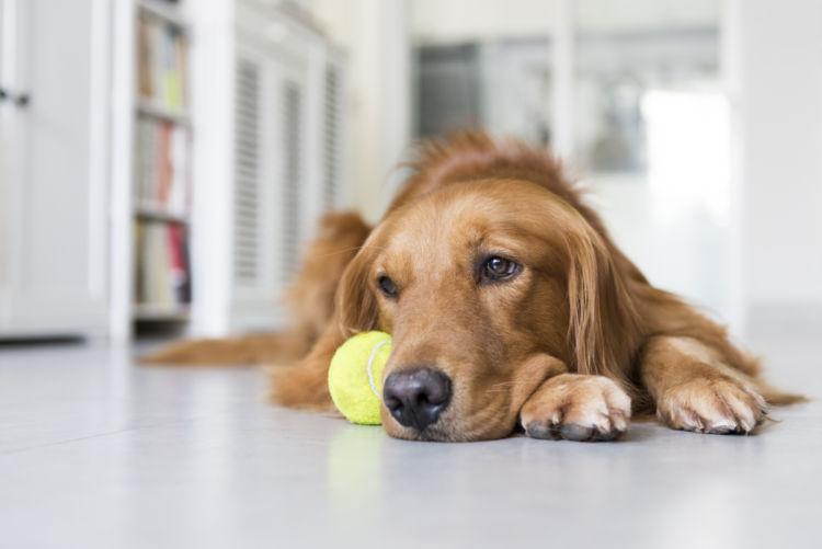 犬の毛包虫症(ニキビダニ症、アカラス症)と間違えやすい病気
