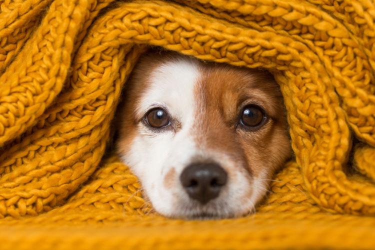 犬が元気がなくなった原因⑤【低体温】