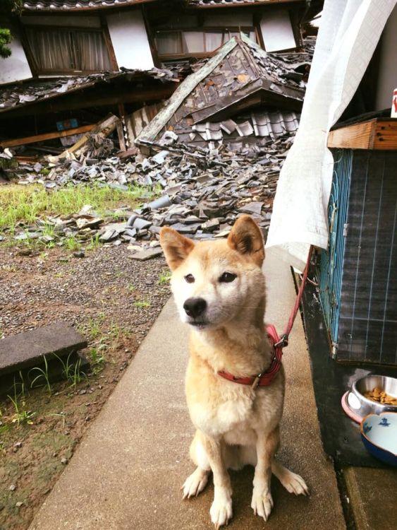 【熊本地震発生時】倒壊家屋と愛犬