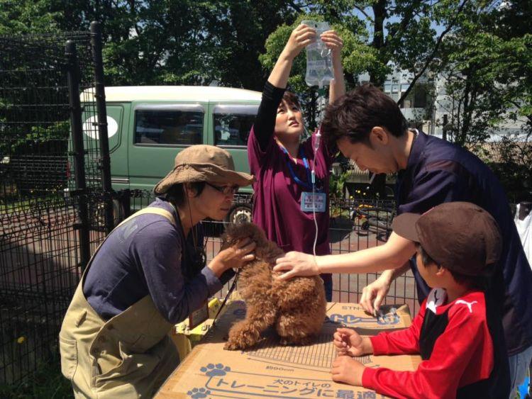 【熊本地震発生時】ボランティア獣医師による診察