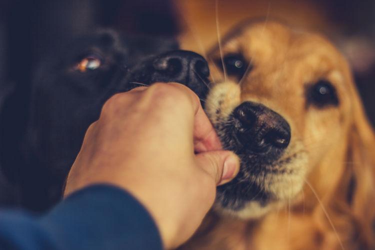 災害時の犬たち