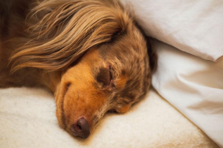 【犬の熱中症】A:損害賠償請求は可能。損害賠償の金額は時価が多い。