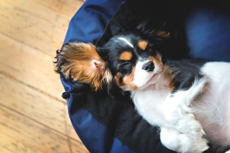 【犬の熱中症】A:購入価格をもとに、総合的に判断。