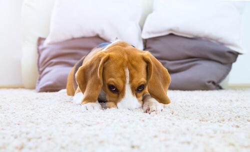 飼い主から離れられない犬が続出中?犬が分離不安症にならないための育て方