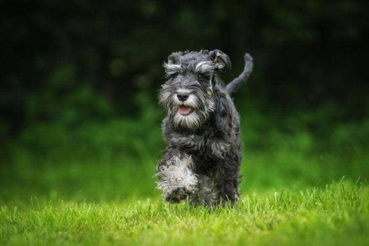 犬の高脂血症とは?