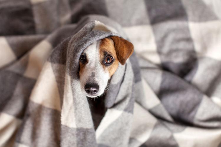 犬の高脂血症【原因】