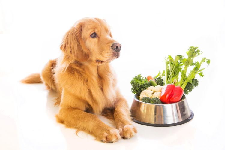 犬の高脂血症【予防対策】