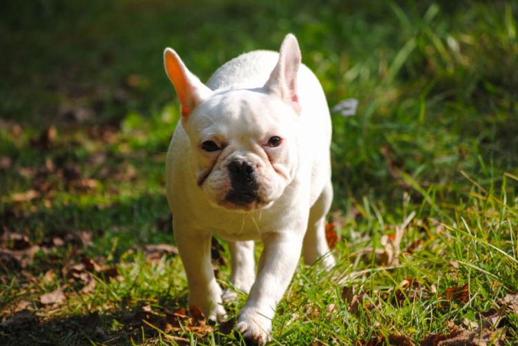 犬の脊髄梗塞(線維軟骨塞栓症)