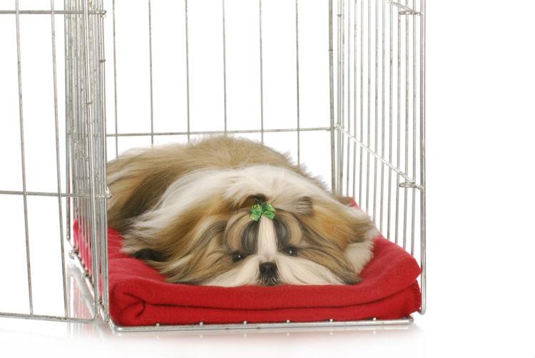 犬の椎間板ヘルニア【治療方法】