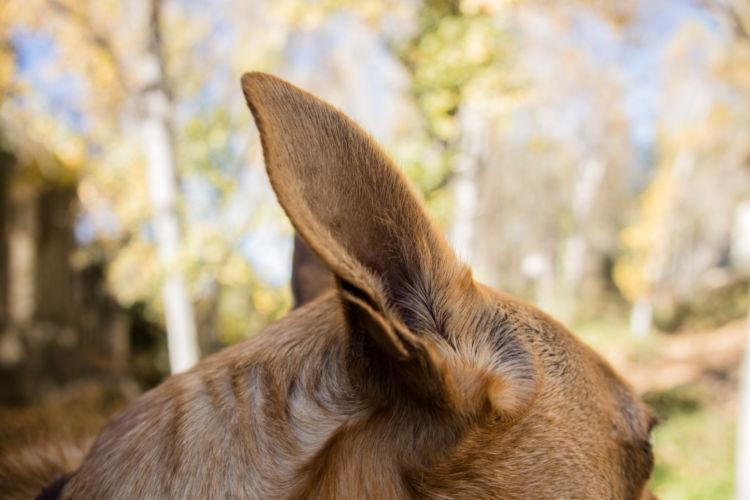 犬の外耳炎【原因】