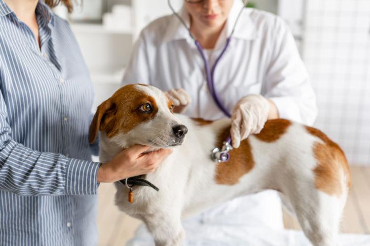 犬の表在性膿皮症【診断方法】