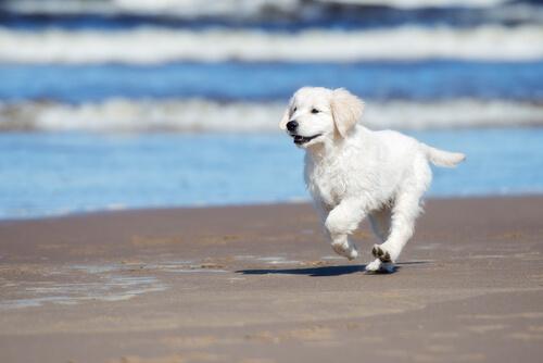100日以上も続く生理で、メス犬の飼い主が気をつけるべき5つのこと