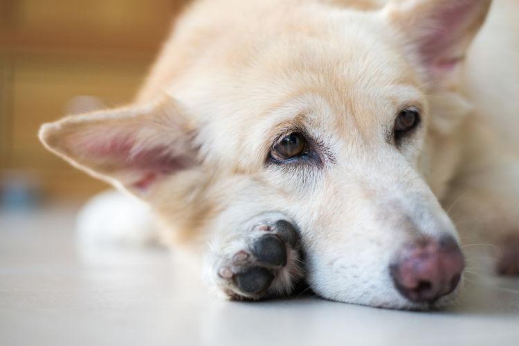 犬の表在性膿皮症【予防対策】