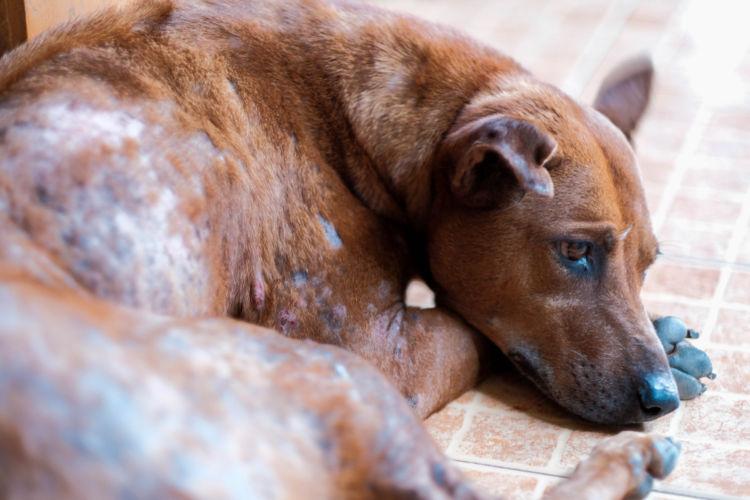 犬のアトピー性皮膚炎【症状】
