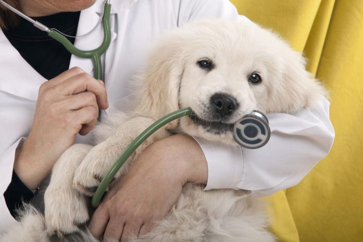 犬のアトピー性皮膚炎【診断方法】