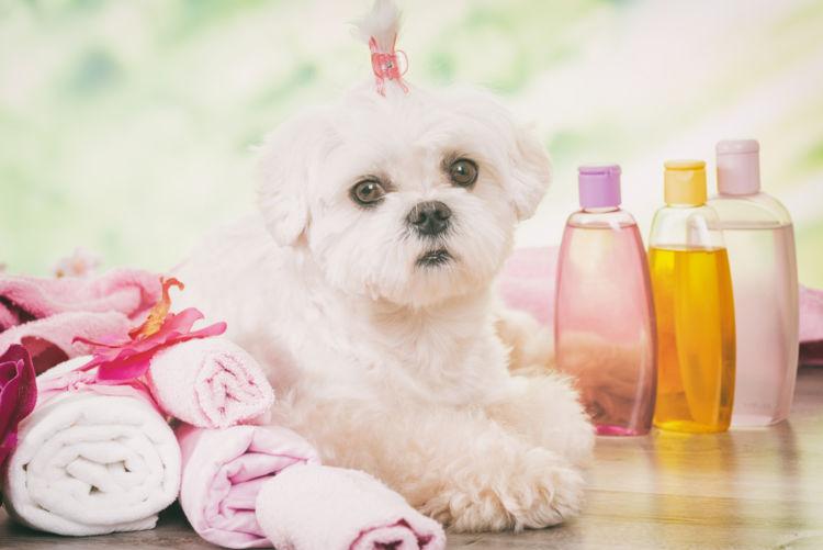 犬のアトピー性皮膚炎【予防対策】