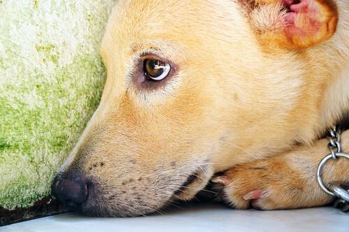 愛犬に無理させてない?犬が最もストレスを感じる3つの瞬間