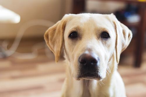 キャベツは犬に与えてもいい?犬の健康にも効果があるキャベツの秘密を探る