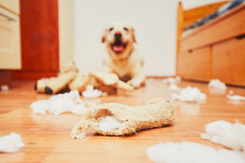 獣医が教える!留守番で家の中を破壊しちゃう愛犬の5つのしつけ方法