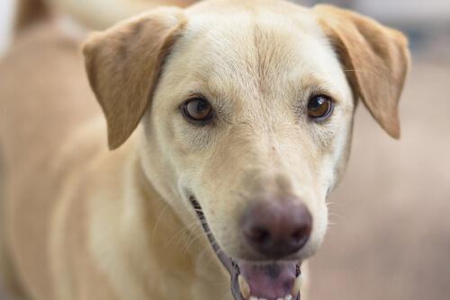 メス犬や高齢犬は膀胱炎になりやすい!知っておくべき症状と原因