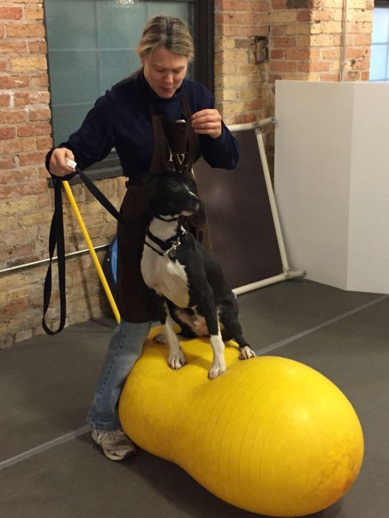 犬のバランスボール