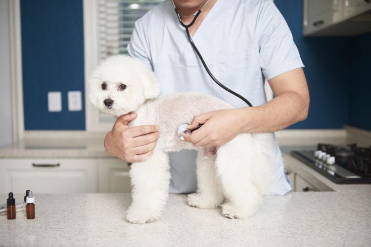 健康診断で犬の病気を早期発見