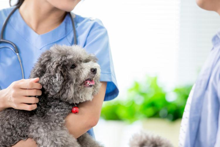獣医師と犬の飼い主との信頼関係
