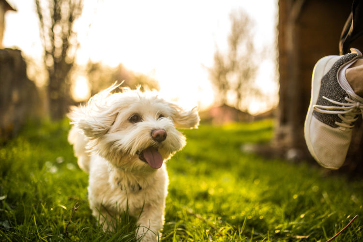 【愛犬の健康寿命】を延ばすには、飼い主の意識が重要!