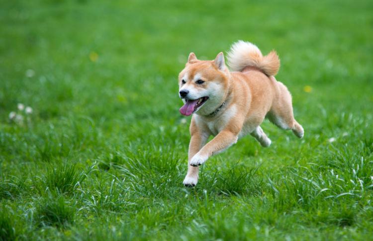 呼吸をして酸素を体内に取り入れる犬