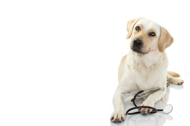 動物病院に連絡する