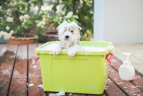 いつも風呂場で大暴れ!犬があんなにもお風呂を嫌がる理由は、「自己主張」にあった?