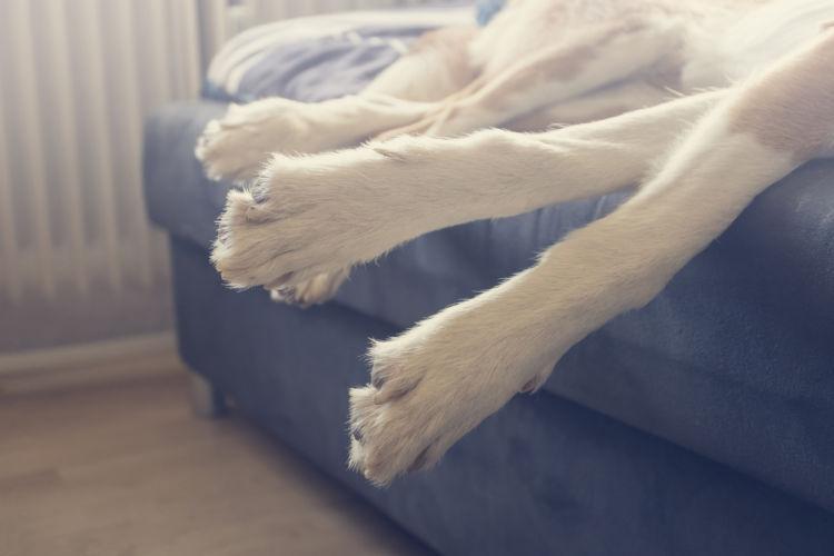 犬が抹茶を飲んでしまった場合の対処法と応急処置は?