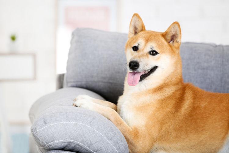 犬に与える豆腐のまとめ