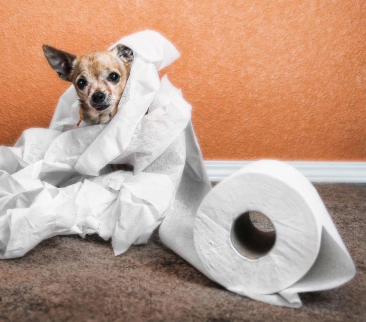 トイレを失敗する理由②トイレに問題がある