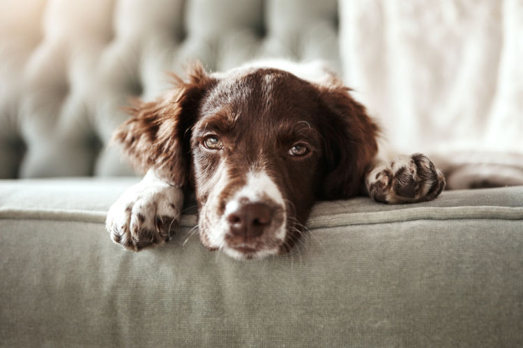犬がカフェインを誤飲した場合の中毒症状は?