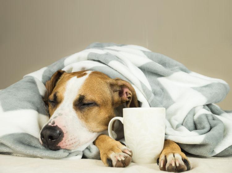 犬がカフェオレを誤飲した場合のまとめ