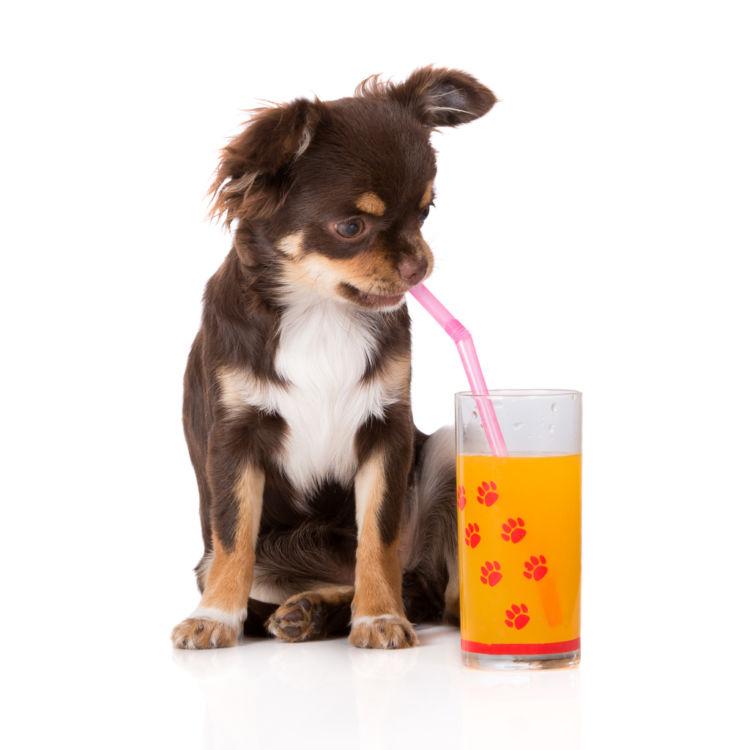 【獣医師監修】犬がみかんジュースを飲んでも大丈夫? みかんの外皮やアレルギーに注意!